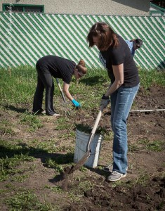 Digging up weeds and quackgrass